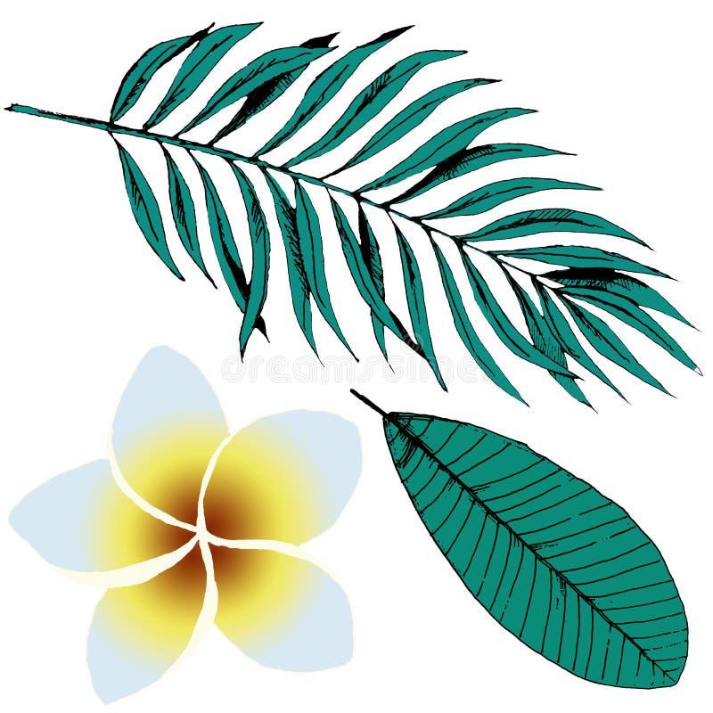 Собрание тропического завода руки вычерченное Листья и цветки эскиза экзотические Установленные листья ладони и Plumeria, Frangip стоковое фото