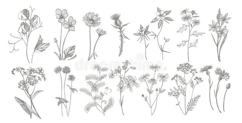 Собрание цветков и трав руки вычерченных Ботаническая иллюстрация завода Винтажный целебный эскиз трав установил руки чернил бесплатная иллюстрация