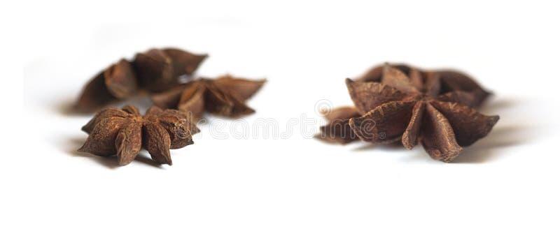 Собрание aniseed звезды изолированное на белизне стоковое фото