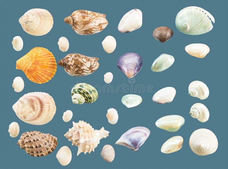 Собрание seashells стоковая фотография