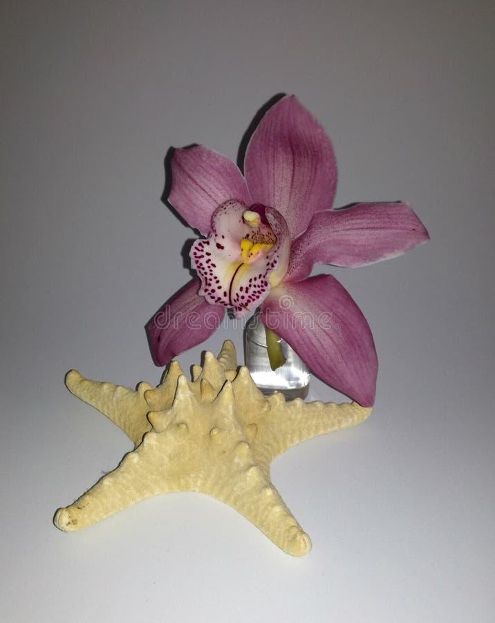 Совершенная розовые и фиолетовые орхидея и раковина, морская звёзда стоковые фотографии rf