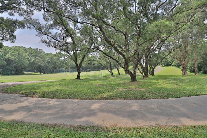 Совершенное поле поля для гольфа травы на hk стоковые изображения rf
