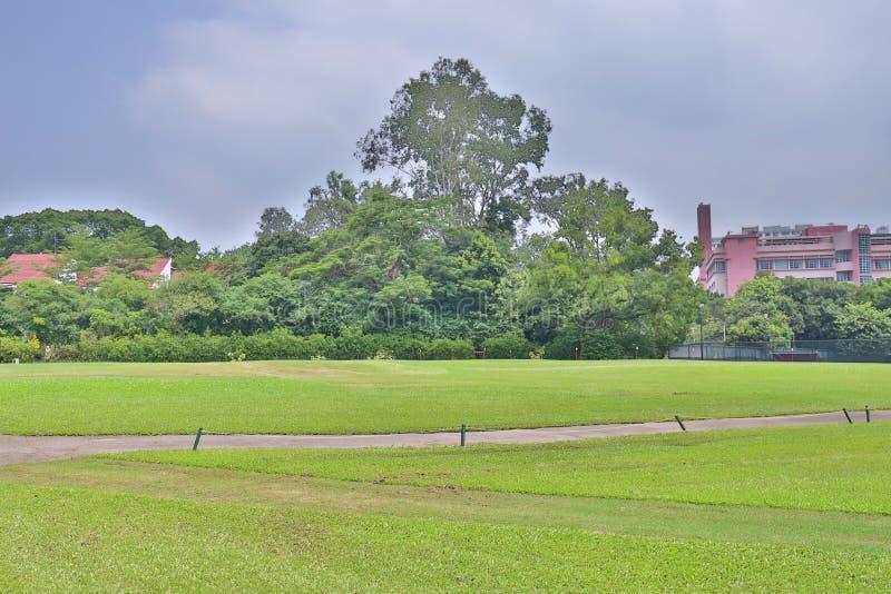 совершенное поле hk поля для гольфа травы стоковая фотография rf