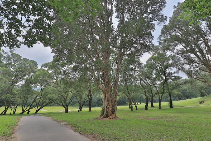 совершенное поле hk поля для гольфа травы стоковые фото