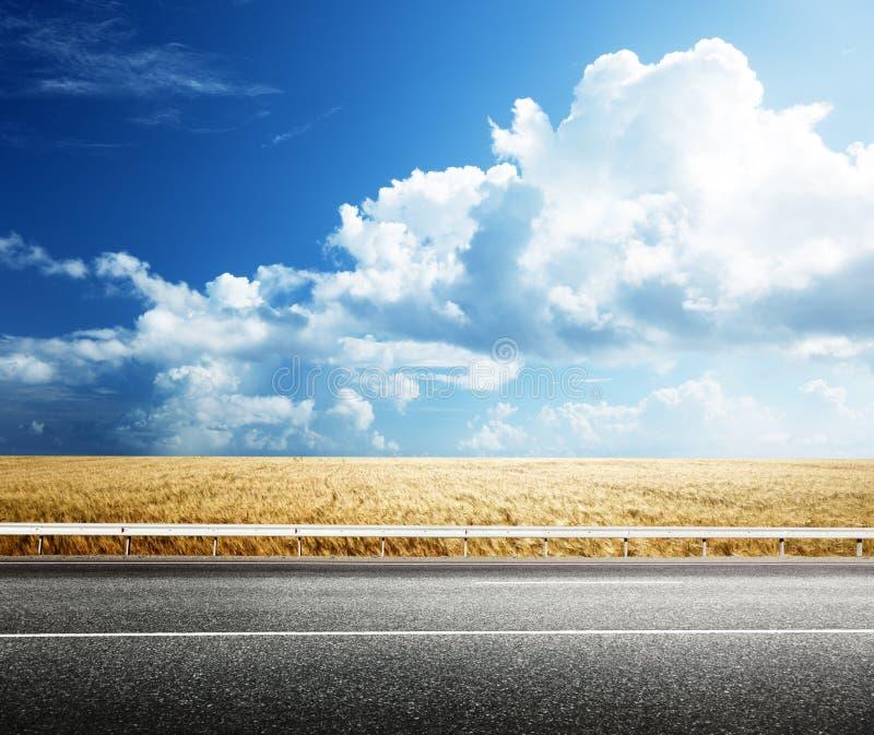 Совершенное пшеничное поле стоковое изображение rf