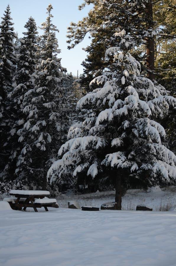 Совершенно мирное пятно пикника: Сцена рождества Snowy на земле национального леса в каскадах стоковое фото