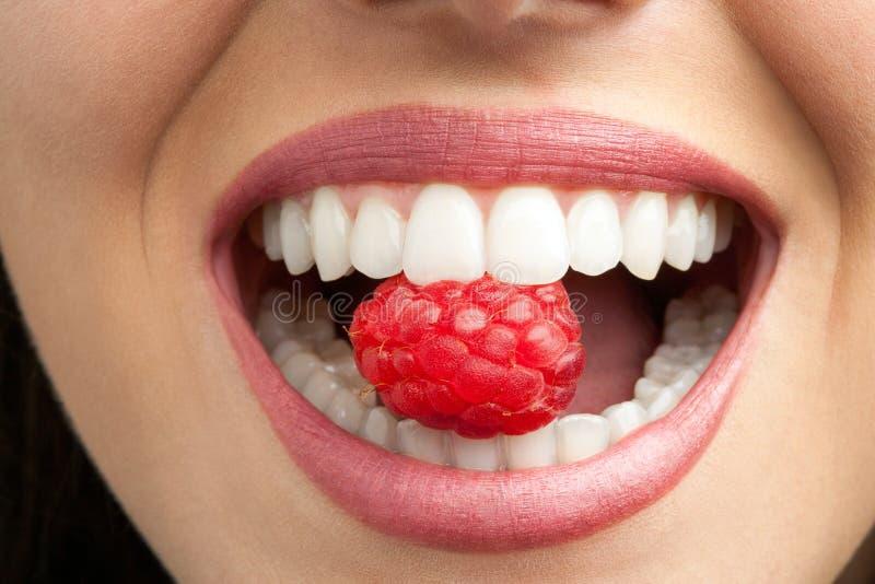 Совершенные зубы сдерживая поленику. стоковое изображение rf