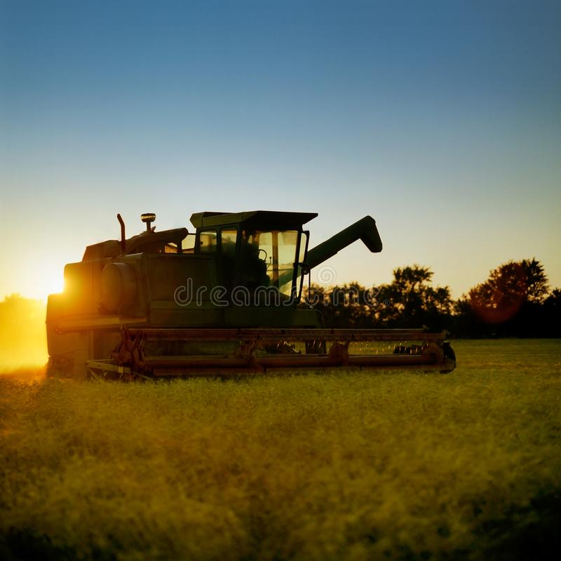 Совместите сбор зрелой золотой пшеницы как наборы солнца стоковое фото rf