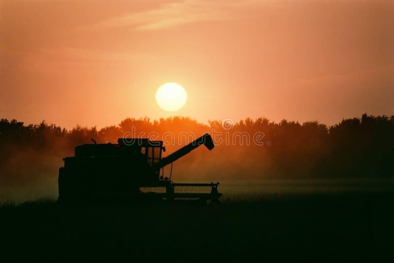 Совместите сбор зрелой пшеницы как наборы солнца стоковое изображение