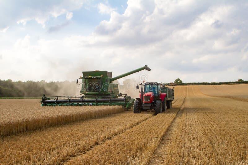 современное вырезывание жатки зернокомбайна подрезывает ячмень пшеницы мозоли работая золотое поле стоковое изображение rf