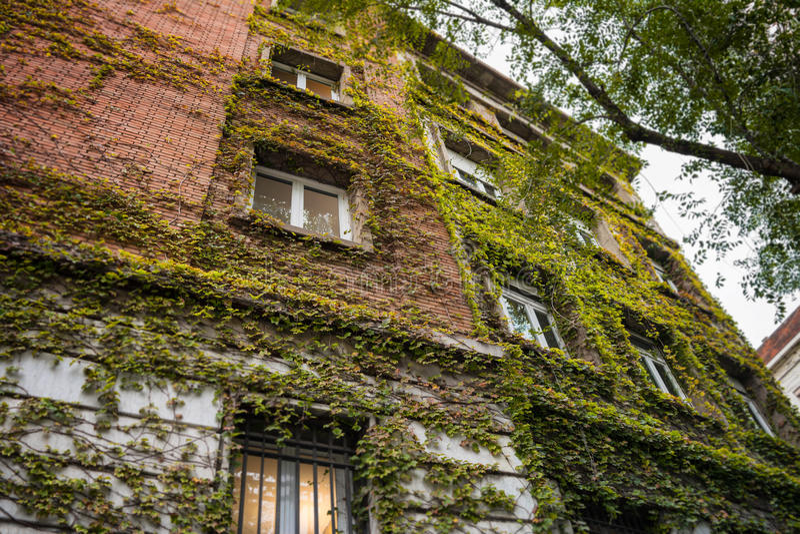 Современное жилое здание предусматриванное путем взбираться завод стоковая фотография rf