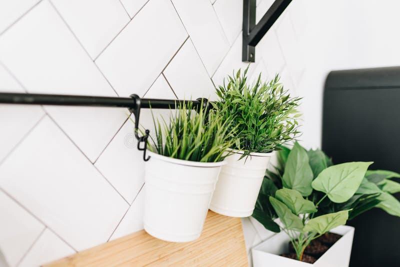 Современные в горшке вися заводы вечнозелёного растения искусственные используемые во внутреннем художественном оформлении стоковая фотография