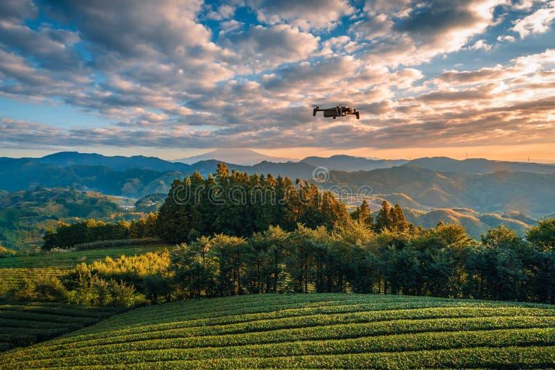 Современный трутень с летанием камеры над Mt Фудзи с полем зеленого чая на восходе солнца в Shizuoka, Японии стоковые фотографии rf