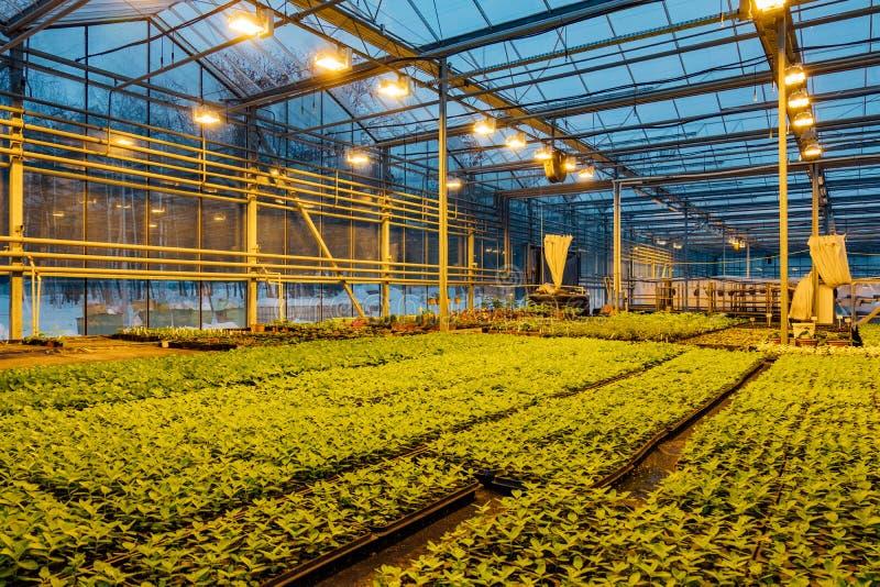 Современный hydroponic парник со сложной системой контроля климата для культивирования аграрных и орнаментальных заводов стоковые фотографии rf