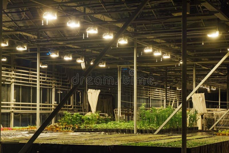 Современный hydroponic парник с системой контроля климата для культивирования цветков и орнаментальных заводов для садовничать стоковое фото