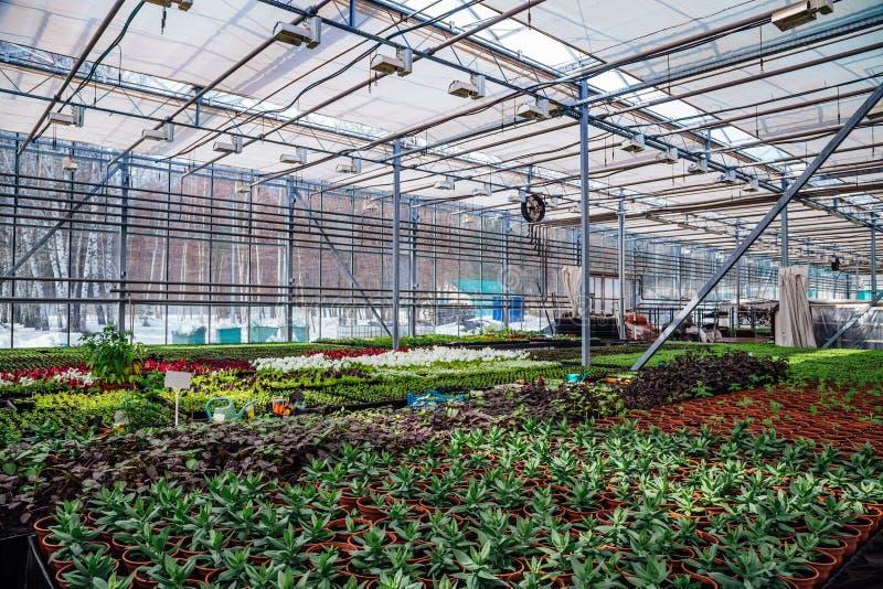 Современный hydroponic парник с системой контроля климата для культивирования цветков и орнаментальных заводов для садовничать стоковое изображение rf
