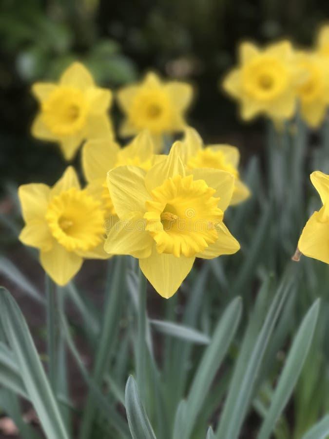 Совсем о цветке стоковая фотография rf