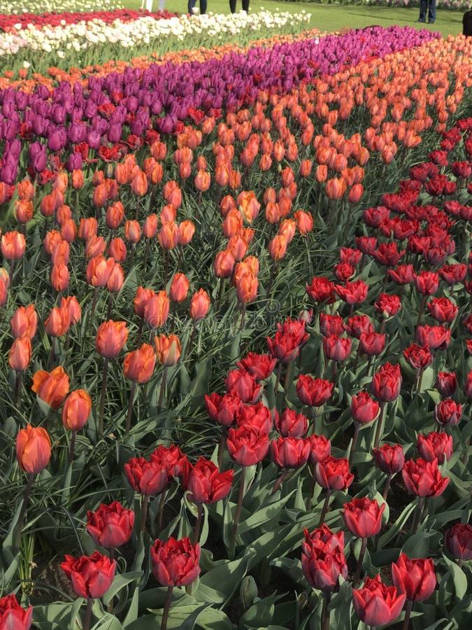 Совсем о цветке стоковое изображение