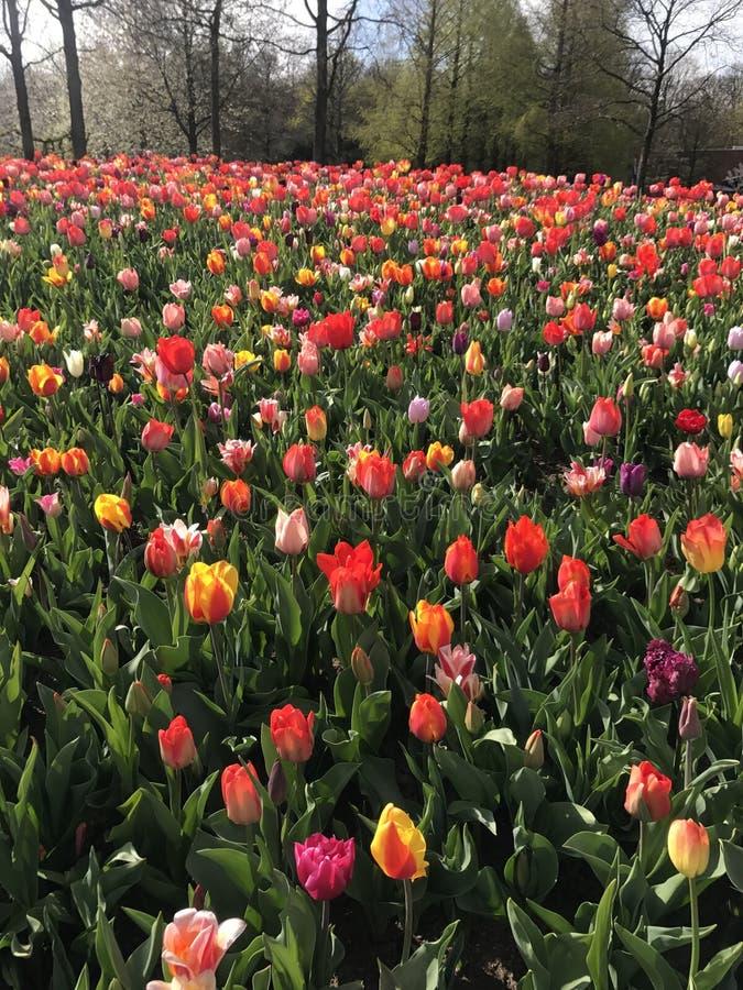 Совсем о цветке стоковое фото rf