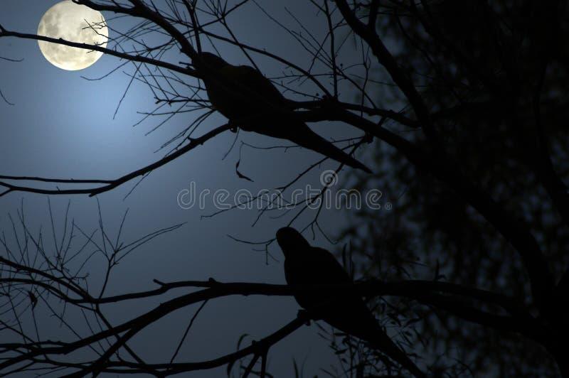 Download совсем темнота больше всего Стоковое Изображение - изображение насчитывающей луна, тайна: 484603
