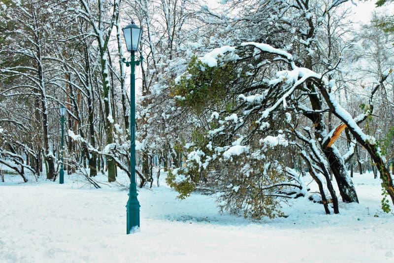 Согнутые и сломанные деревья в муниципальном парке после снежностей внутри стоковые фотографии rf