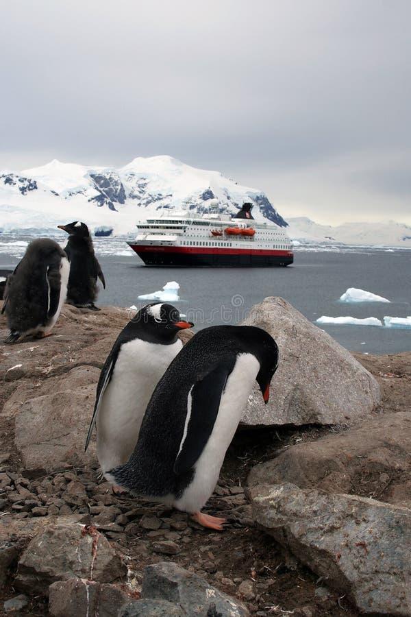 содержатели Антарктики стоковые фотографии rf