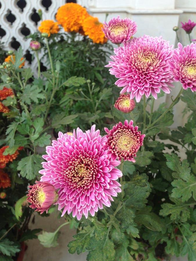 соедините цветки стоковые фотографии rf
