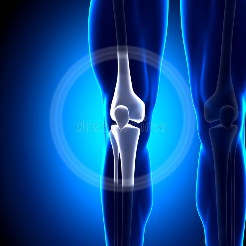 Соединение колена - косточки анатомии иллюстрация штока