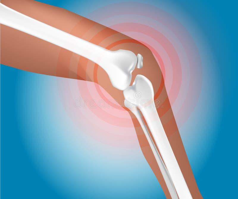 Соединение колена бесплатная иллюстрация