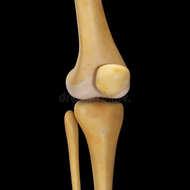 Соединение колена стоковое фото rf
