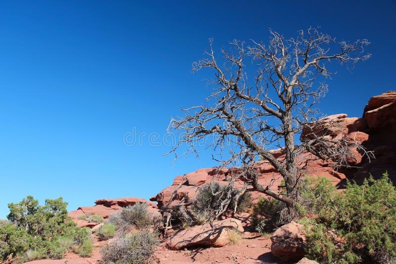 Соединенные Штаты outdoors стоковое изображение rf