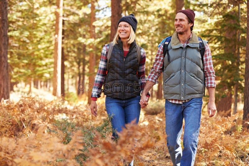 Соедините держать руки идя в лес, Калифорнию, США стоковая фотография rf