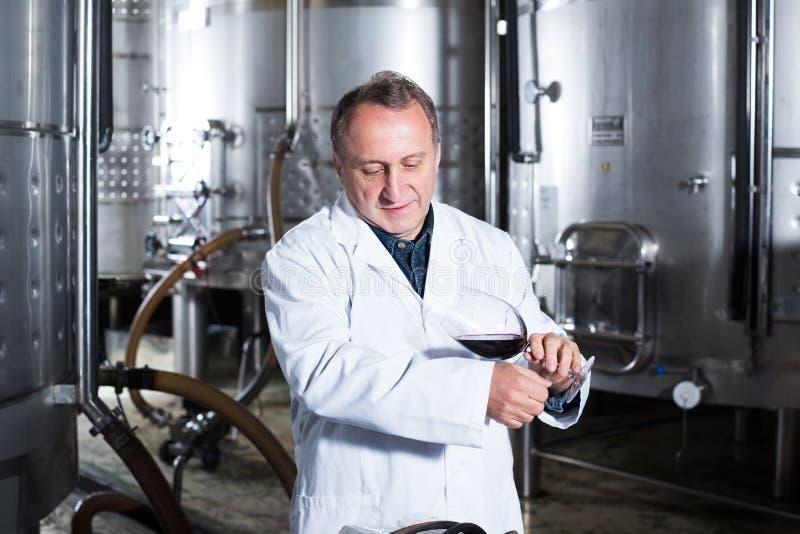 Создатель вина контролирует качество вина стоковое изображение rf