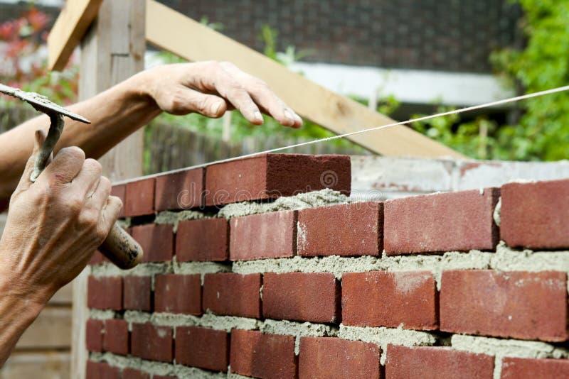 соколок bricklayer стоковое фото