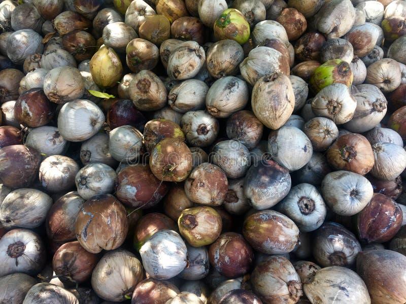 Сок пищевого ингредиента кокосов острова плода кокоса испытывающий жажду стоковая фотография rf
