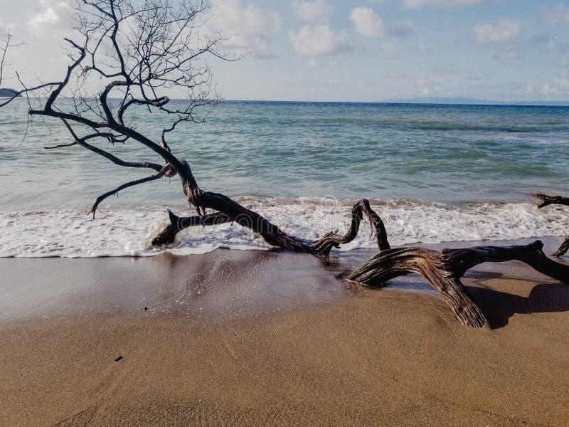 Соленые моря ветви стоковые фотографии rf