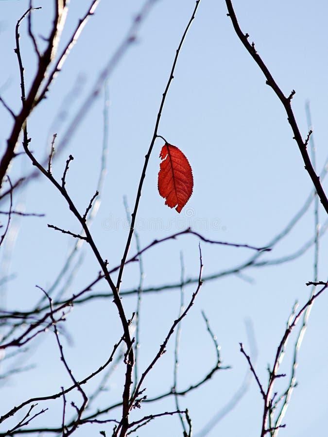 Солитарные листья стоковая фотография
