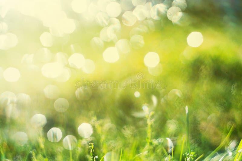 Солнечная абстрактная зеленая предпосылка природы, выборочный фокус стоковые фотографии rf