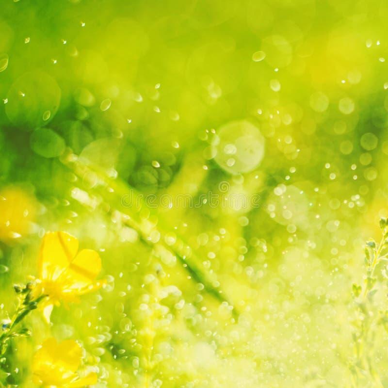 Солнечная абстрактная зеленая предпосылка природы, выборочный фокус стоковое фото