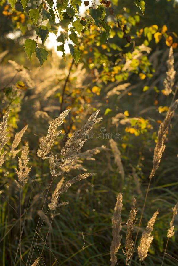 Солнечная осень стоковое изображение rf