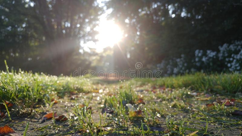 Солнечная роса стоковые фото