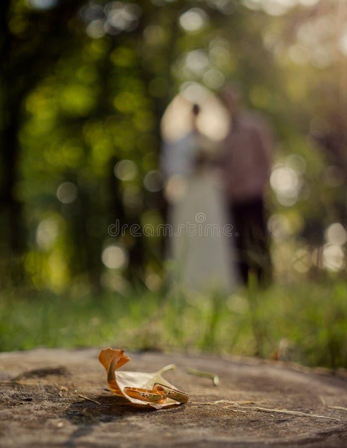 Солнечная свадьба осени стоковое фото rf