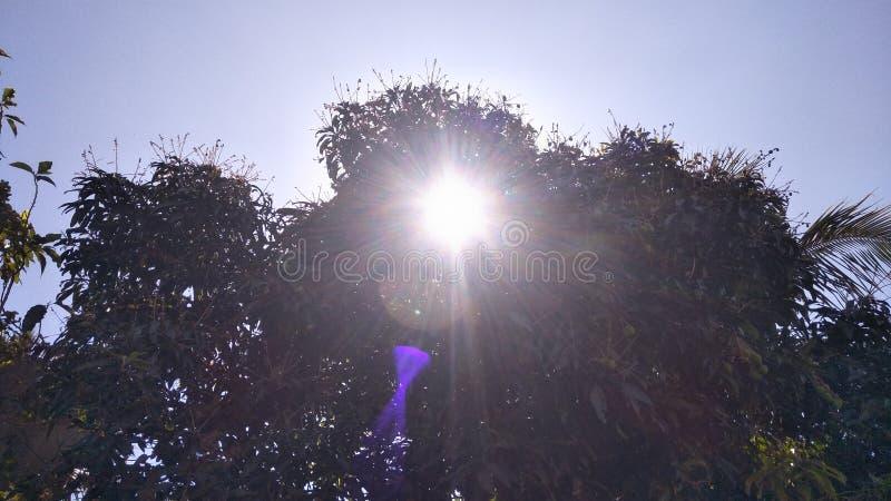 Солнечное дерево mongo стоковые фотографии rf
