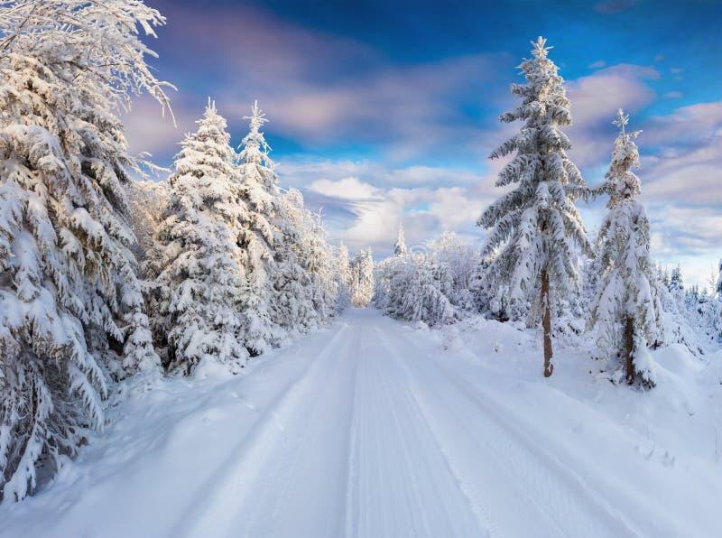 Солнечное утро зимы в прикарпатских горах с снежной страной стоковое фото