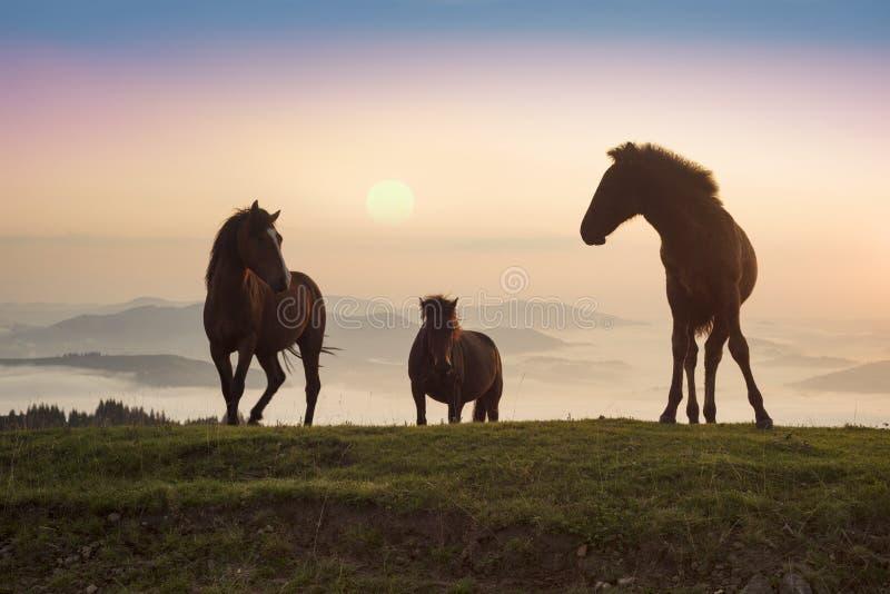 Солнечное утро и свободные лошади пасут на верхней части среди диких прикарпатских панорам Украины все лето и осень, и на зима стоковое изображение