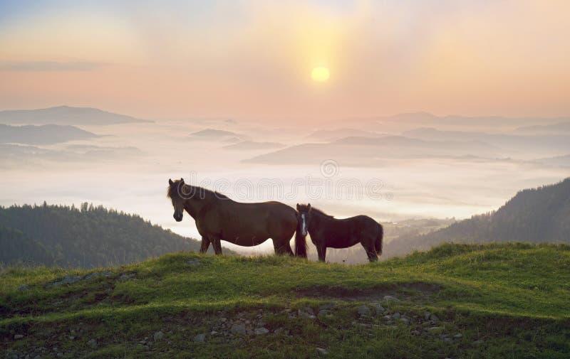 Солнечное утро и свободные лошади пасут на верхней части среди диких прикарпатских панорам Украины все лето и осень, и на зима стоковая фотография