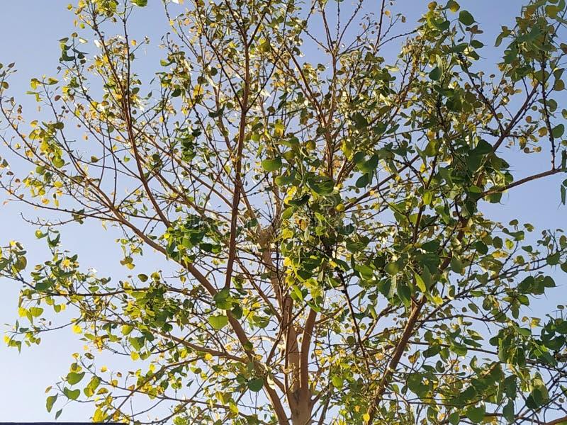 Солнечность дерева поглощая стоковые фото