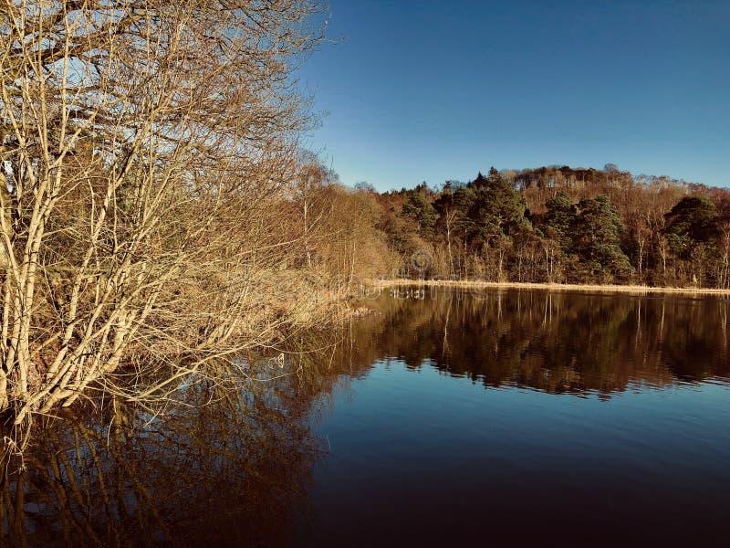 Солнечность зимы над озером стоковая фотография rf