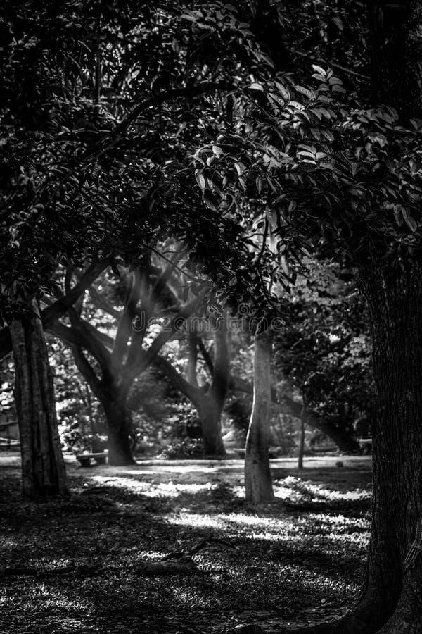 Солнечность утра стоковое изображение rf