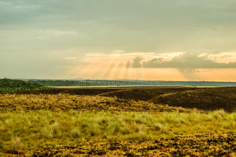 Солнечные лучи в саванне стоковые изображения rf